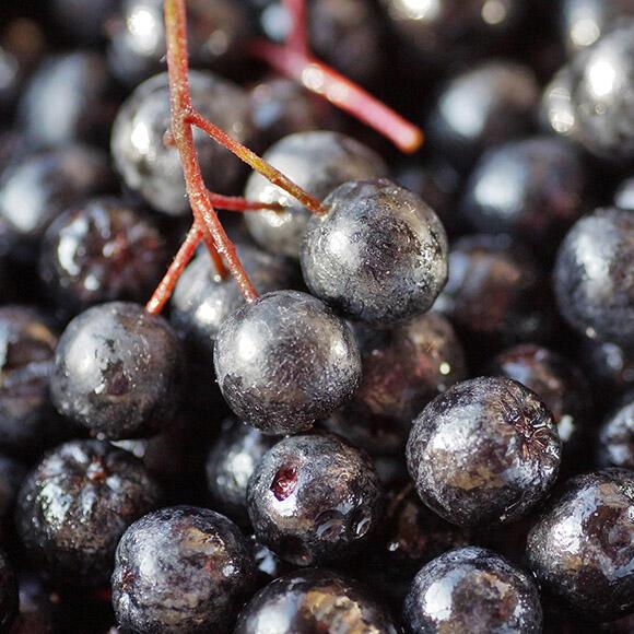 Aronia Berries – Chokeberries (organic and conventional)
