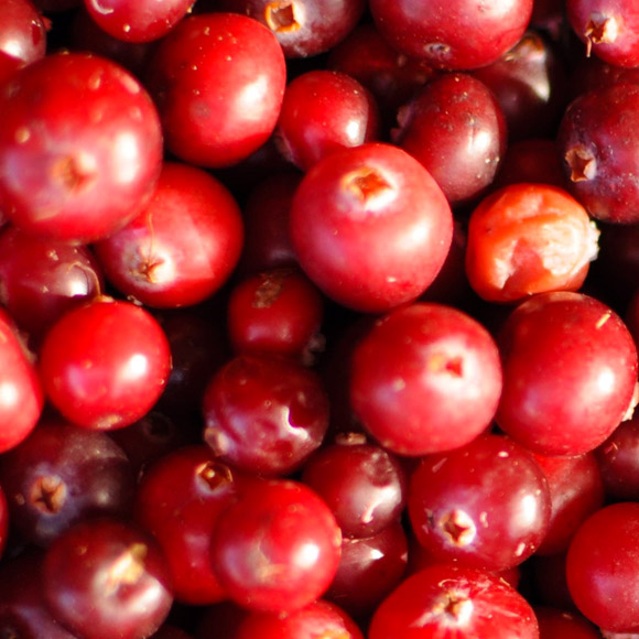 IQF frozen Wild cranberries (organic and conventional)